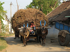 India - Sights & Culture - rural transport truck
